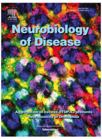 Cragnaz, L., Klima, R., Skoko, N., Budini, M., Feiguin, F., Baralle, F.E. 2014. Aggregate formation prevents dTDP-43 neurotoxicity in the Drosophila melanogaster eye. Neurobiol Dis 71C, 74-80