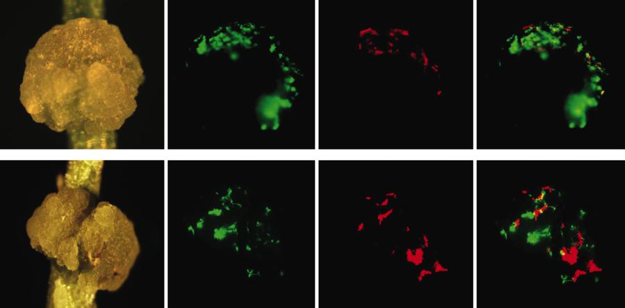 Bacteriology Figure