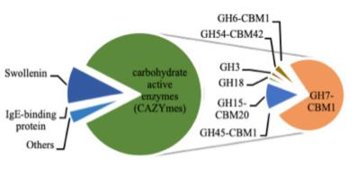 Composition of cellulase concoction