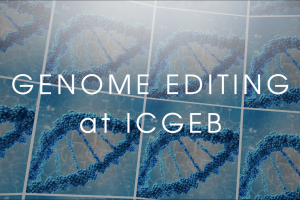 Genome Editing at ICGEB